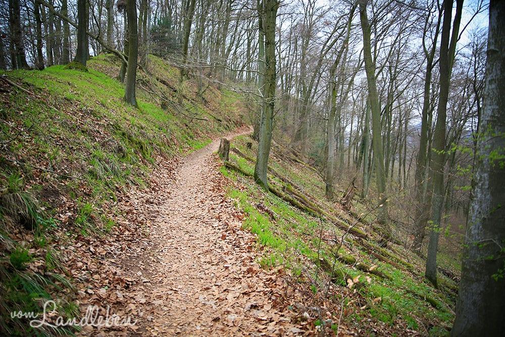 Rheinsteig-Wanderung zum Drachenfels
