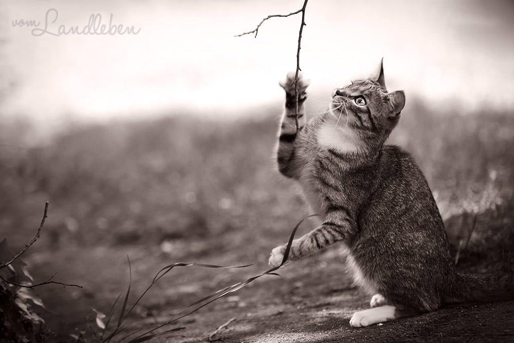 Juli, unsere Katze