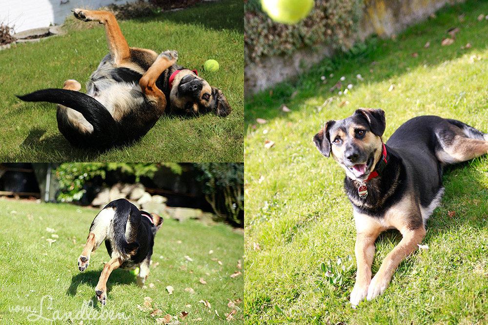 Nala Herzenshund