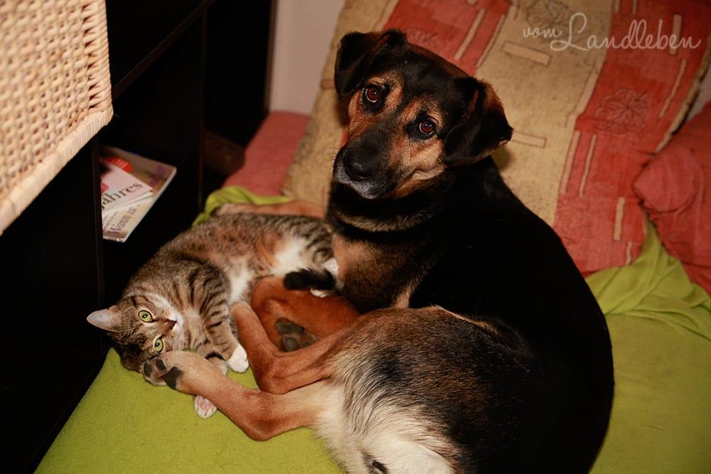 Nala und Juli – Hund und Katze kuscheln