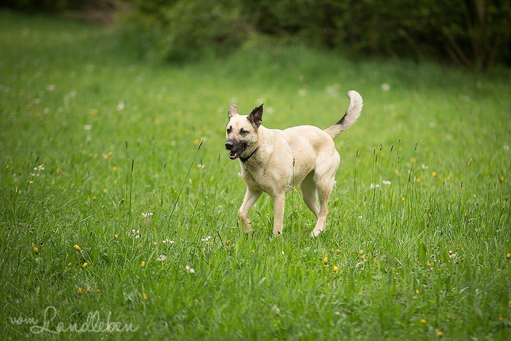 Hunde im Schlosspark - Ju
