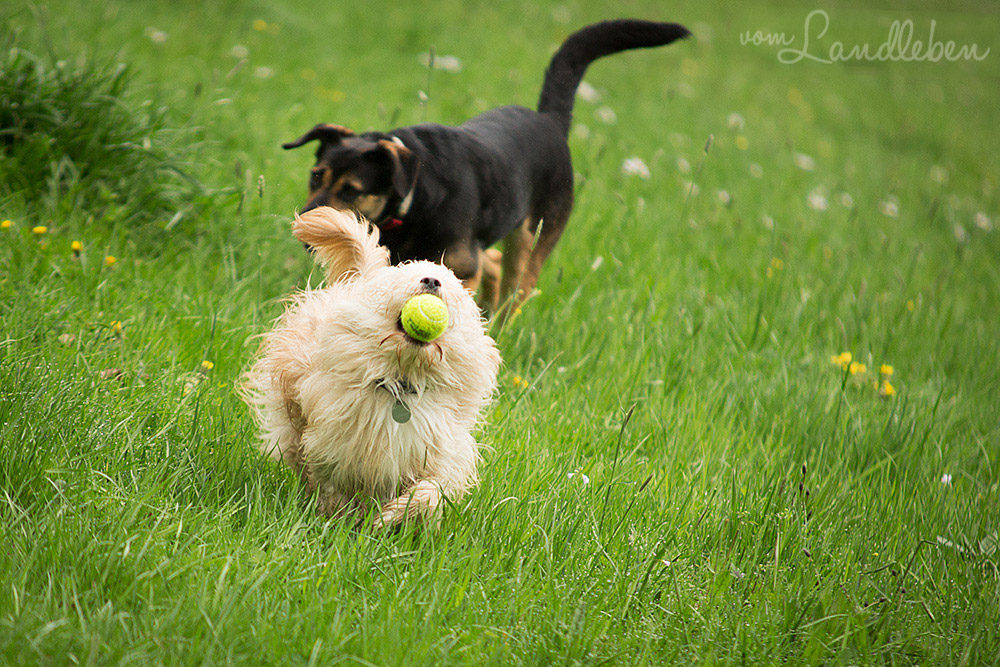 Hunde im Schlosspark - Butch und Nala