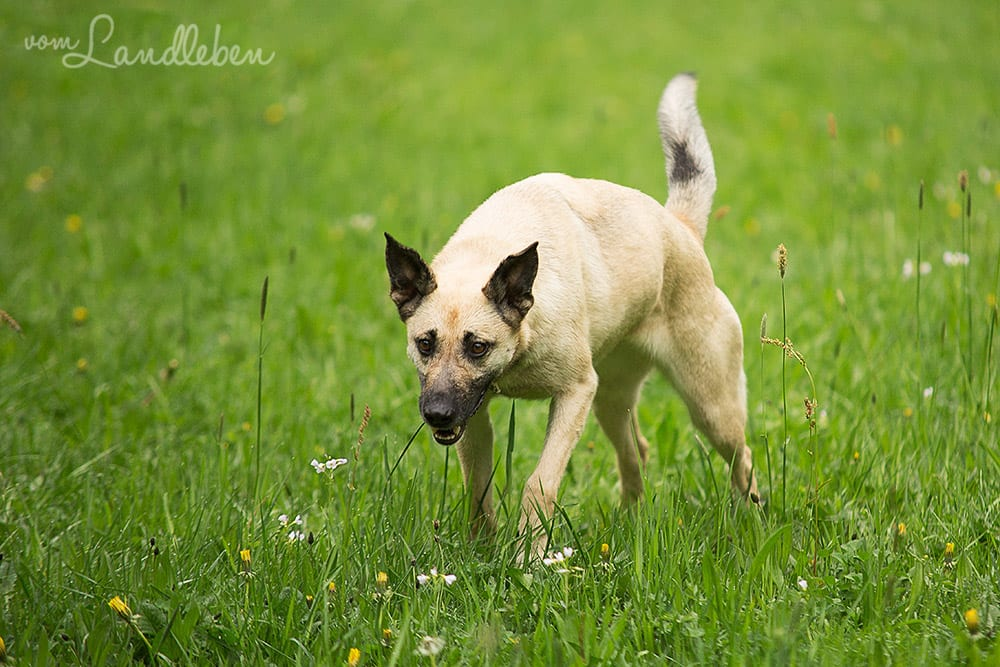 Hunde im Schlosspark - Jule