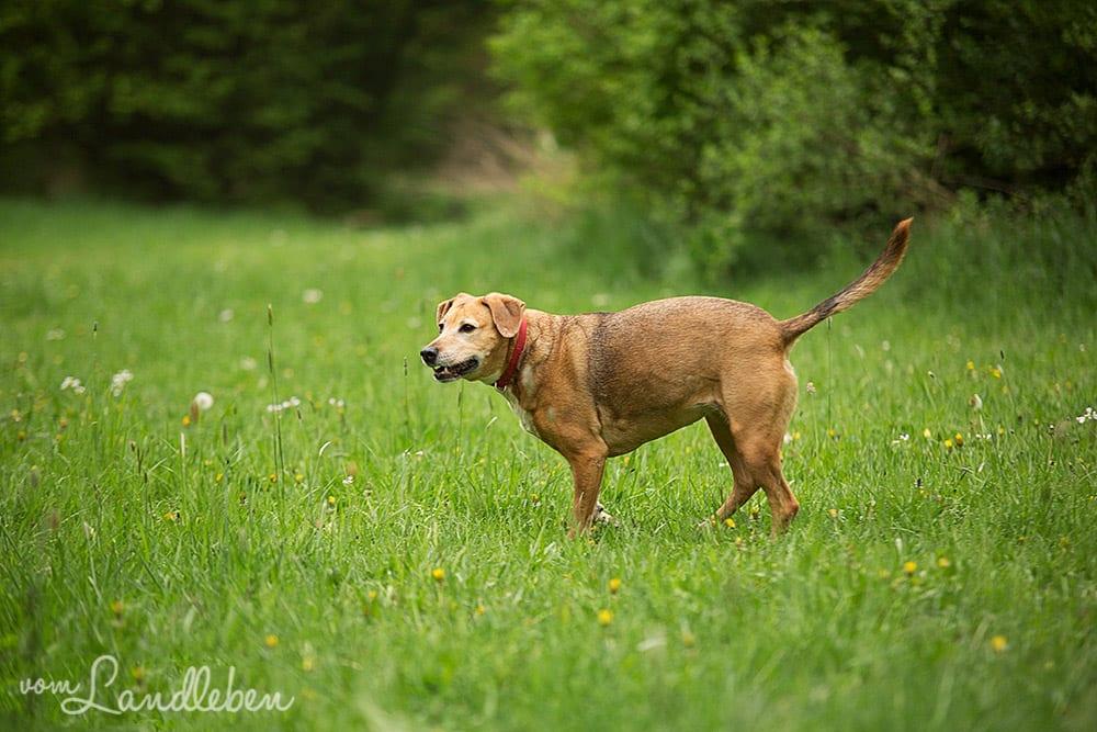 Hunde im Schlosspark - Eksi