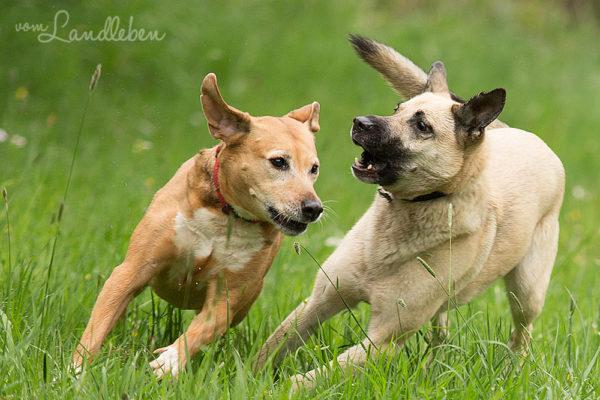 Hunde im Schlosspark - Jule und Eksi