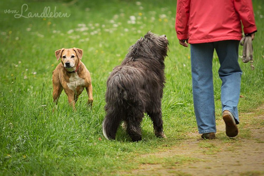 Hunde im Schlosspark - Eksi und Magnus