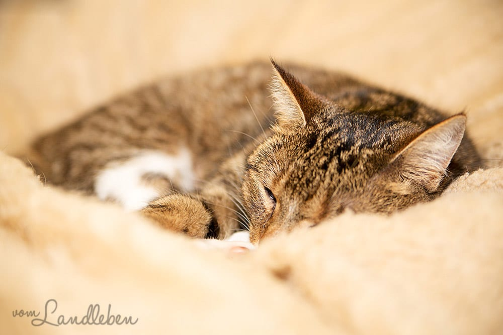 Unsere kleine Katze Juli