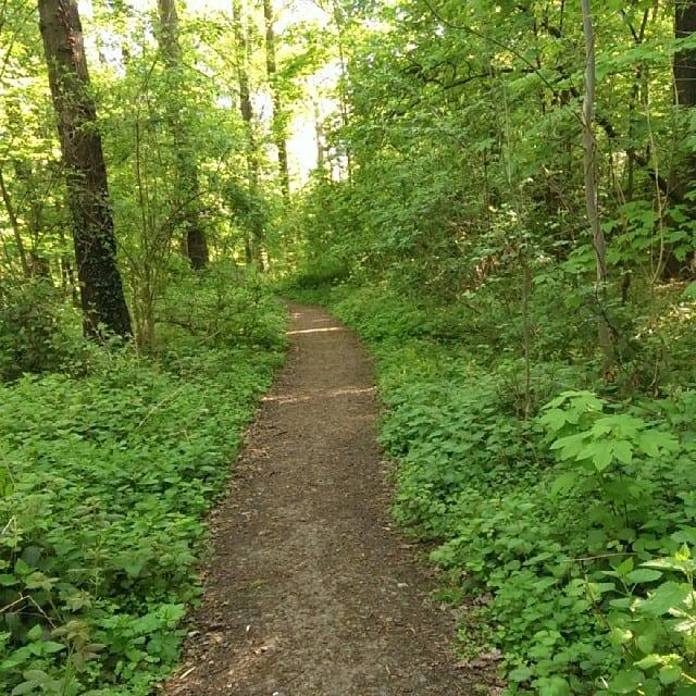 #pmdd15 - Im Wald