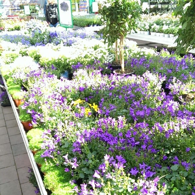 #pmdd15 - Im Gartencenter