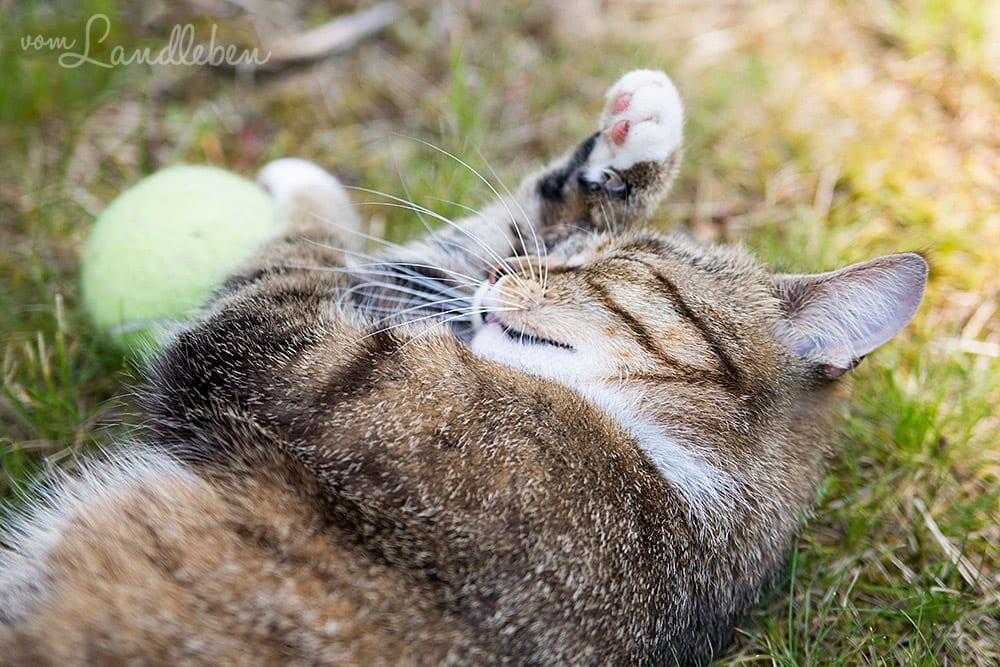 Die Katze und der Tennisball...