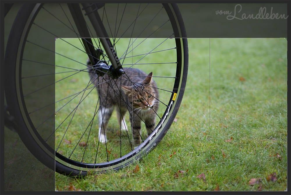 Freistellungswerkzeug in Photoshop