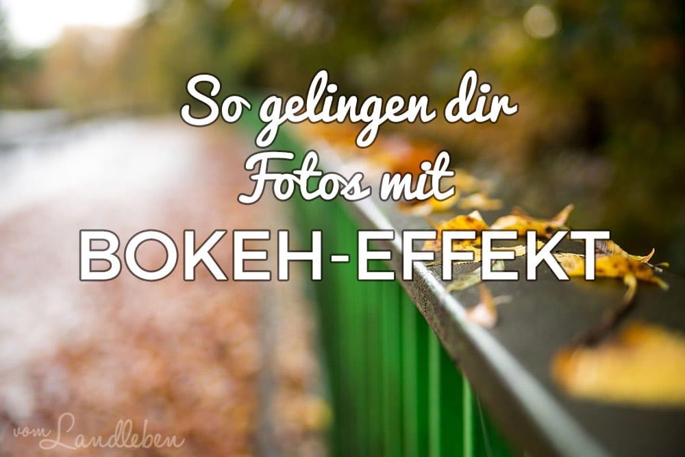 Bokeh-Effekt beim Fotografieren