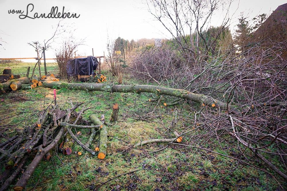 Bäume fällen auf unserem Grundstück