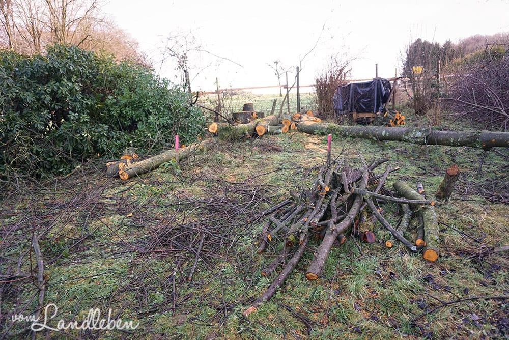 Bäumefällen auf unserem Grundstück