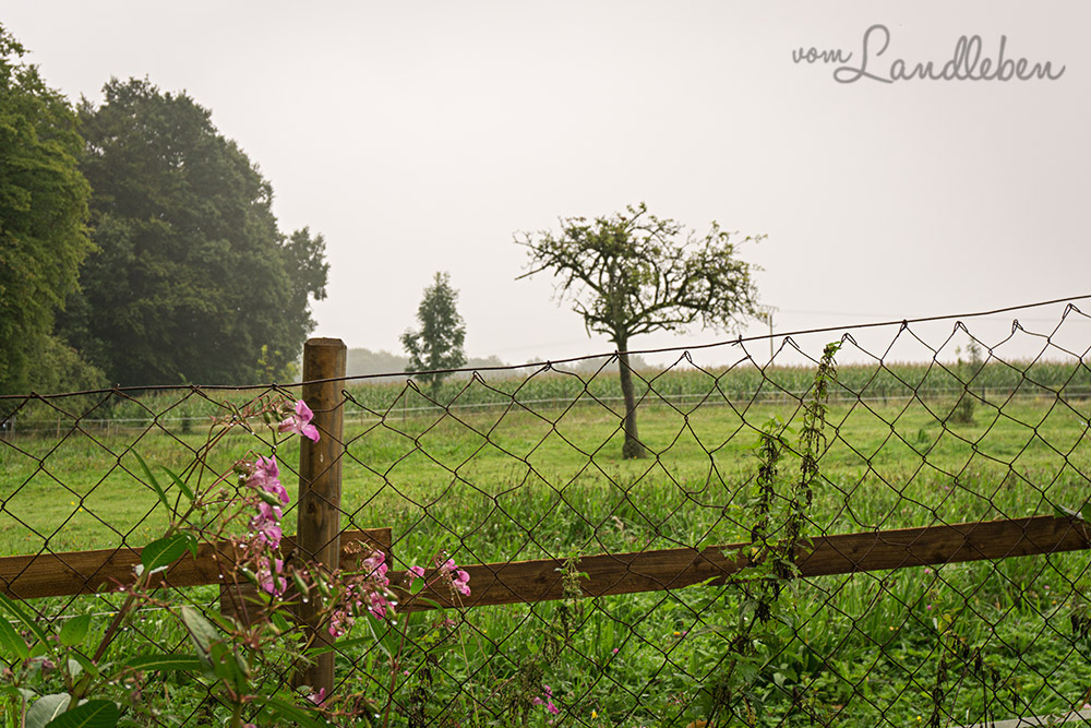 Der Blick vom Grundstück auf die angrenzende Weide
