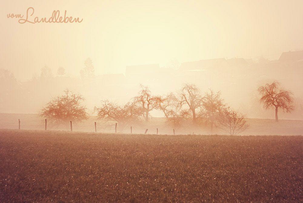 Nebelmorgen auf dem Dorf