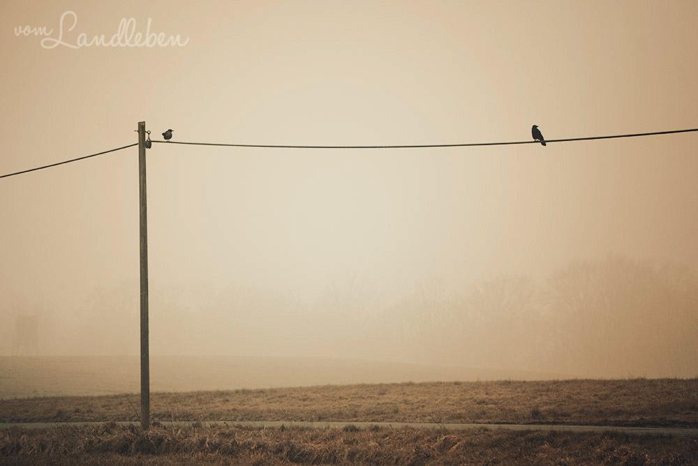Nebelmorgen auf dem Land