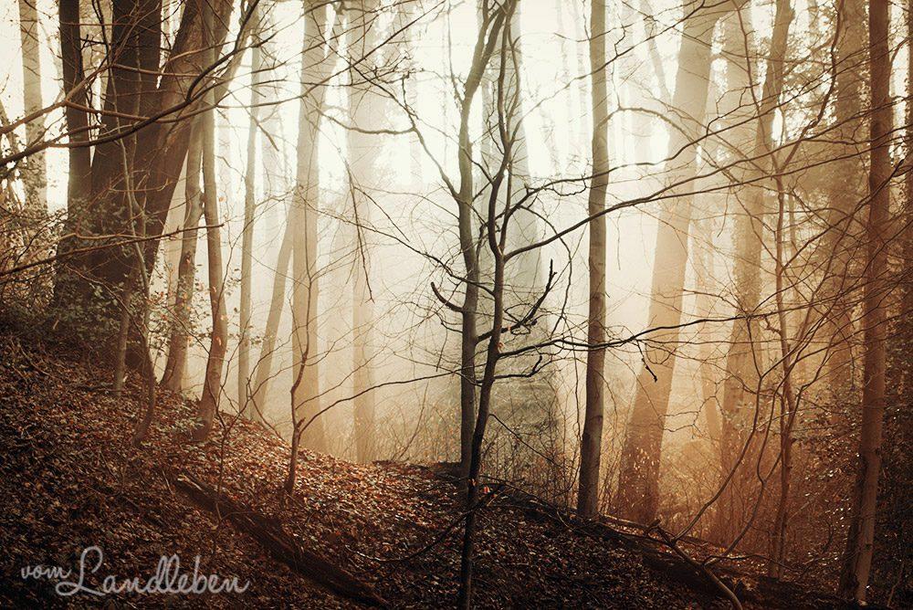 Nebelmorgen im Wald