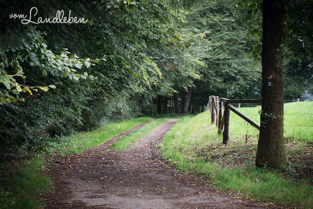 Spaziergang an der Wahnbachtalsperre