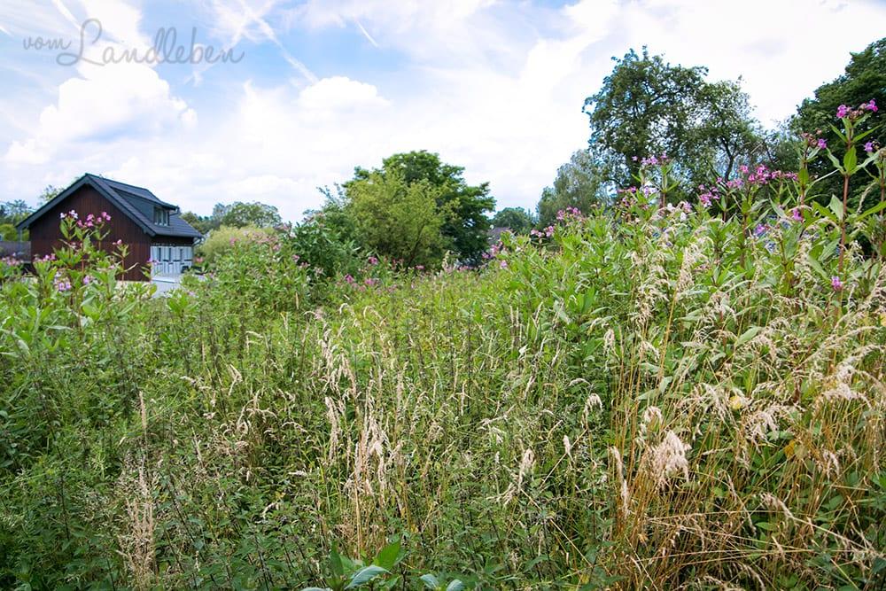 Unser Grundstück - Juli 2016