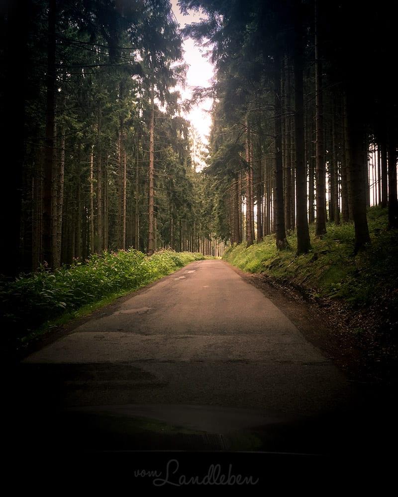 Waldweg bei Lindlar - unterwegs zur Ruine Eibach
