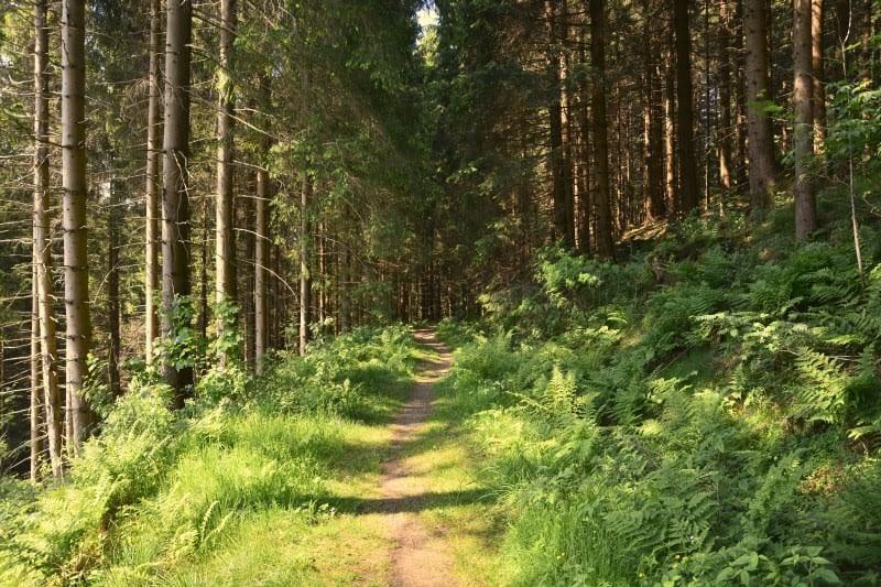 Wälder im Harz - Foto (c) Lisa Bönemann, harz-region.de