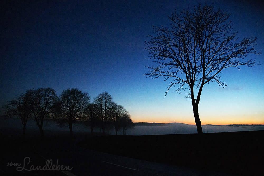 #fotoprojekt17 - Winterbäume