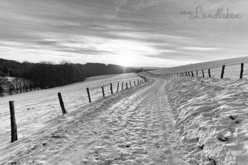 Projekt Graustufe - Winterlandschaft