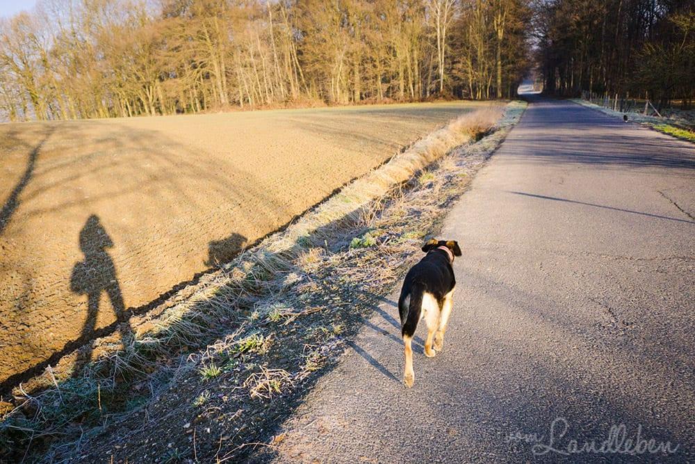 Mit Hund und Katze spazieren gehen