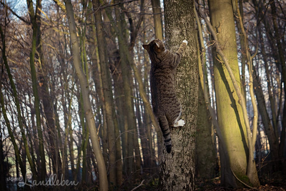 Unsere Katze klettert auf einen Baum