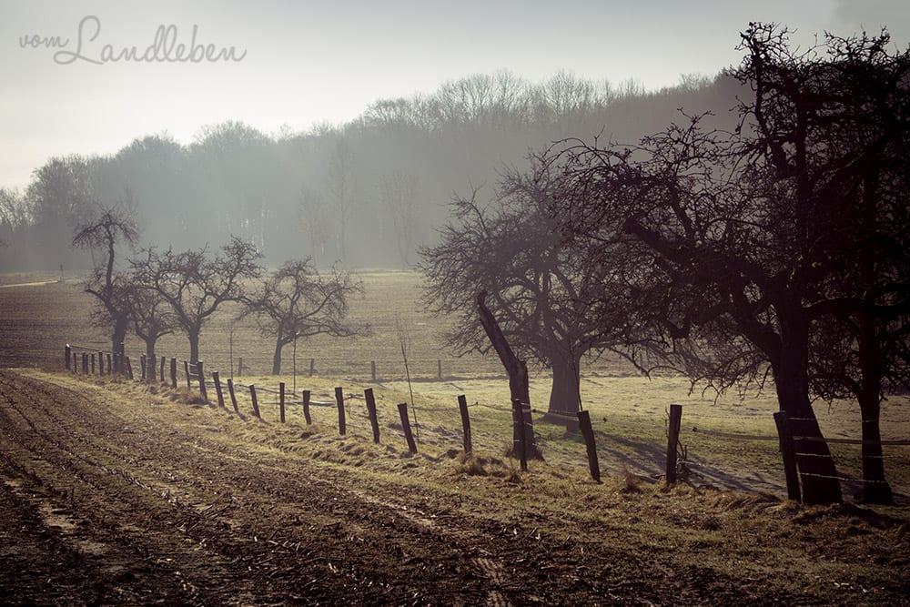 Spaziergang auf Feldwegen