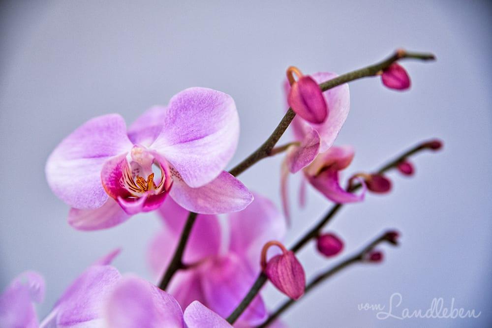 Orchidee in meinem Arbeitszimmer