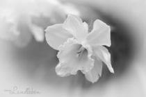Projekt Graustufe: Frühling