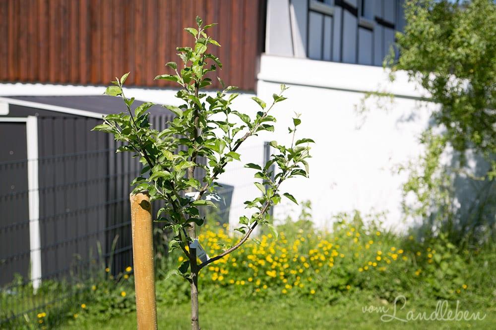 Gartenguckloch im Mai 2017 - Apfelbaum