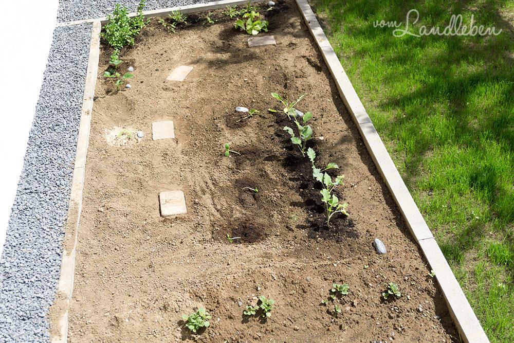 Gartenfehler: zu dicht pflanzen