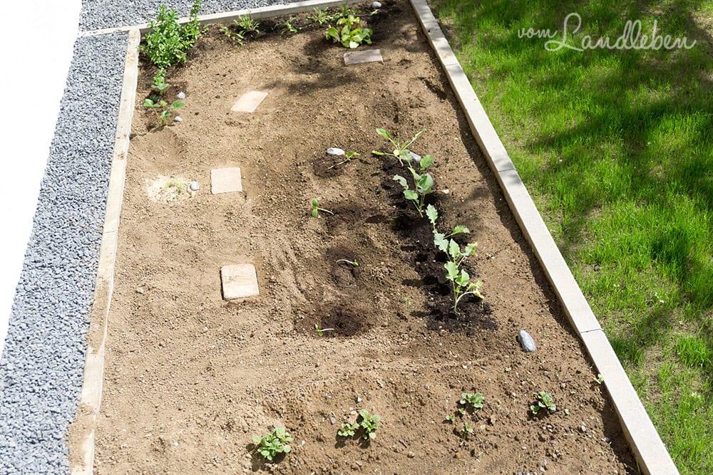 Gartenguckloch im Mai 2017 - Gemüsebeet