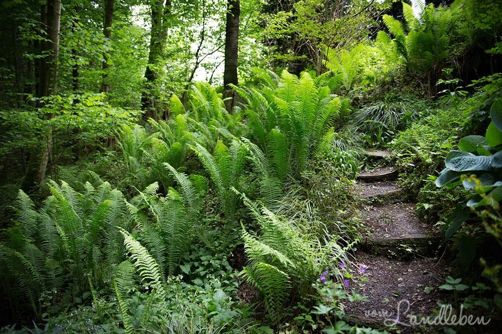 Hof Tüschenbonnen - Waldgarten