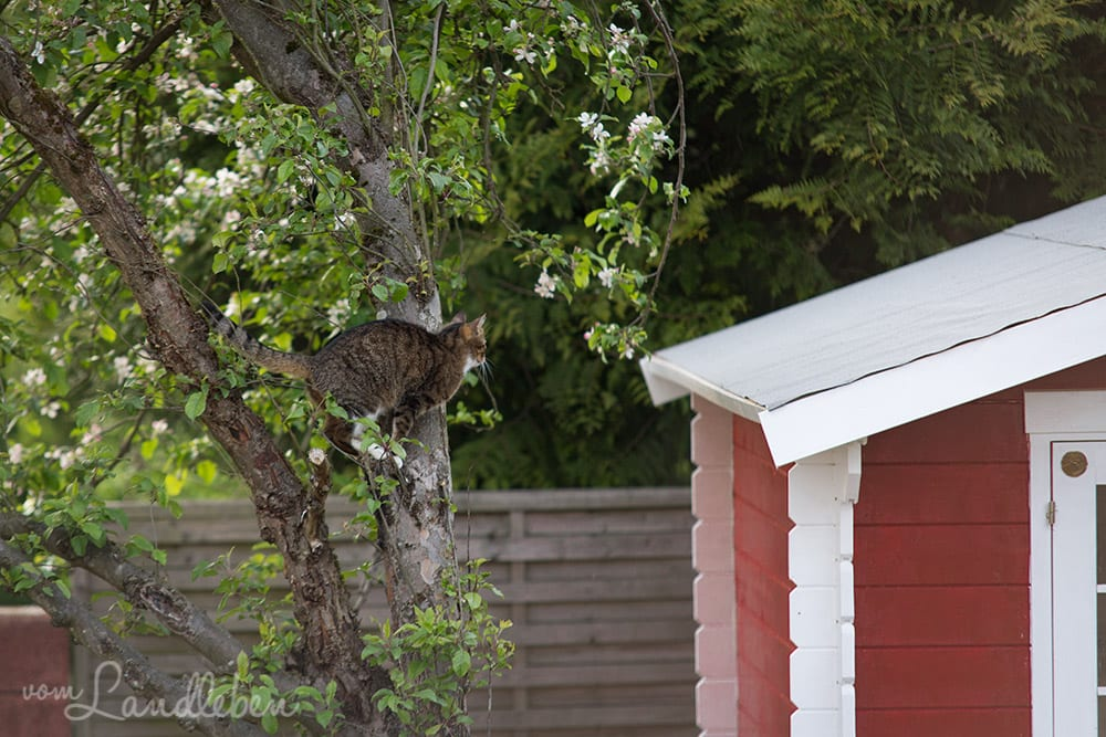 Juli klettert im Apfelbaum herum