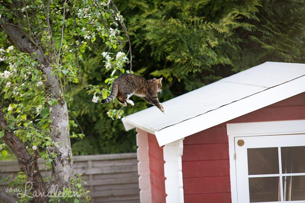 Juli springt auf das Gartenhäuschen