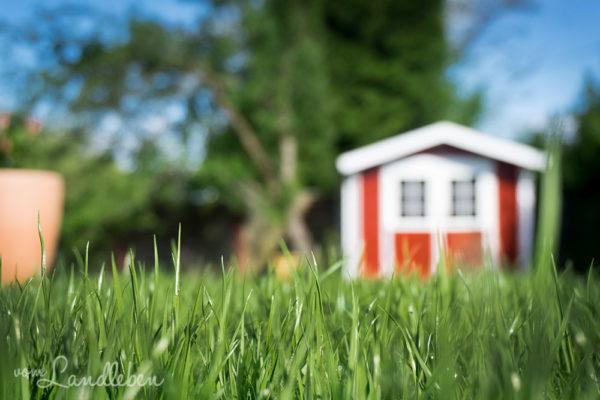 Unser Rasen wächst
