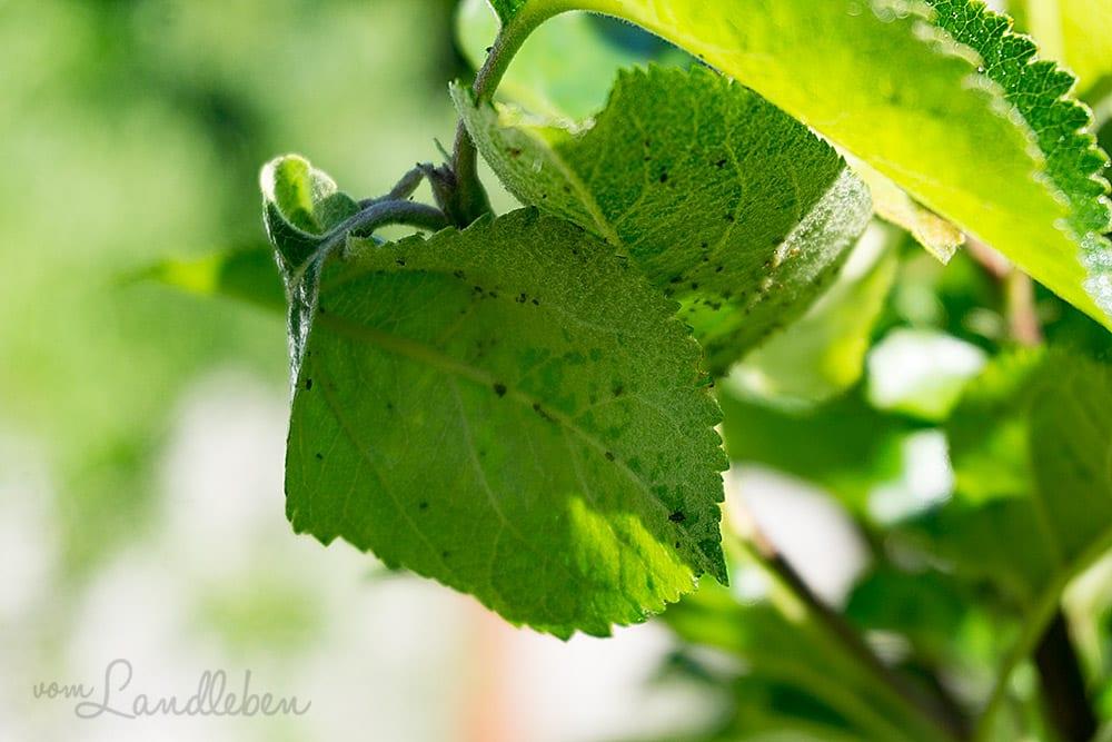 Wie Ich In Unserem Naturgarten Rapsol Gegen Blattlause Einsetze