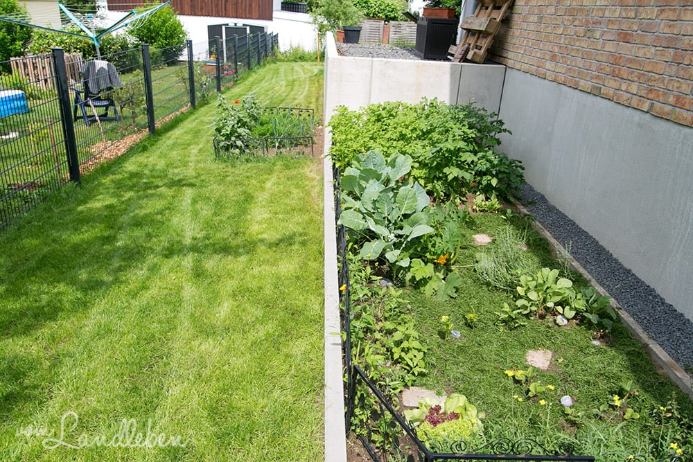 Gemüsebeete im Juni 2017