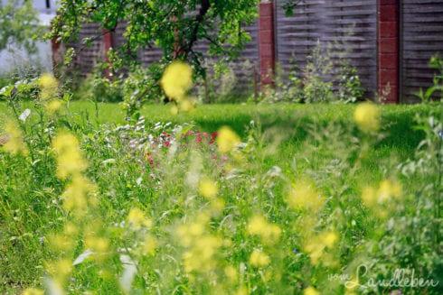 Wildblumen in der Mulde