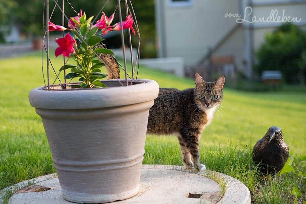 Die Gartenbewässerung mit unserer Zisterne