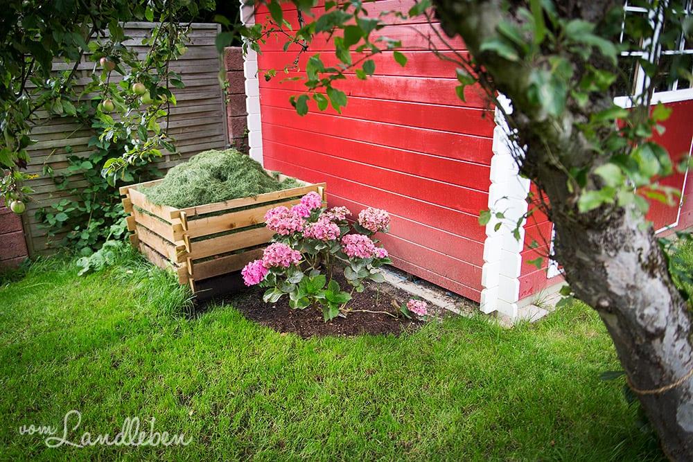 Hortensie neben dem Kompost