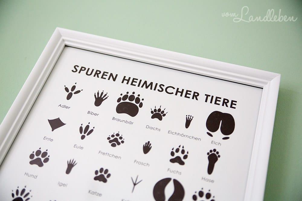 Infografik Poster Blattformen, Tierspuren und Vogelsilhouetten bei Landleben
