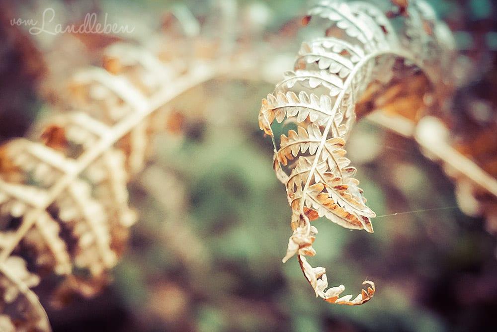 Farn im Herbst