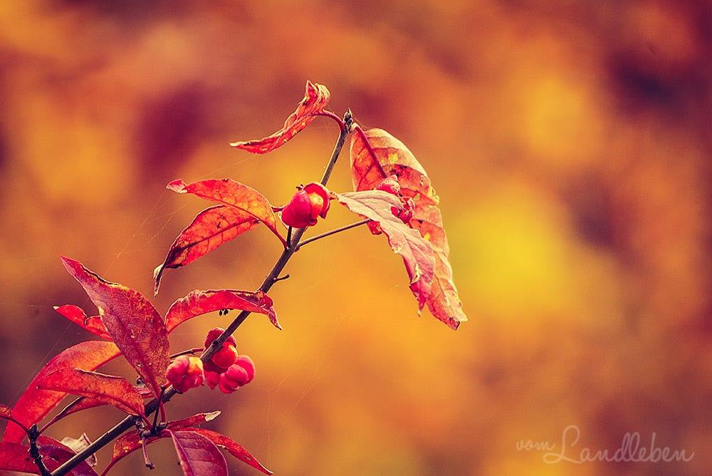 Tag-und-Nacht-Gleiche im Herbst - Mabon