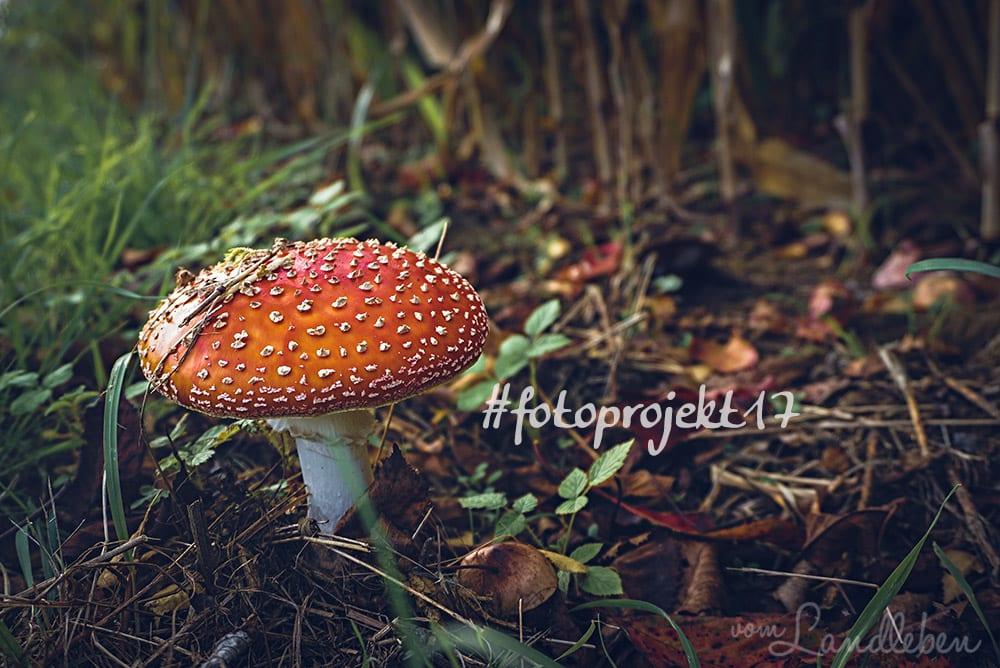 #fotoprojekt17 – Herbstspaziergang