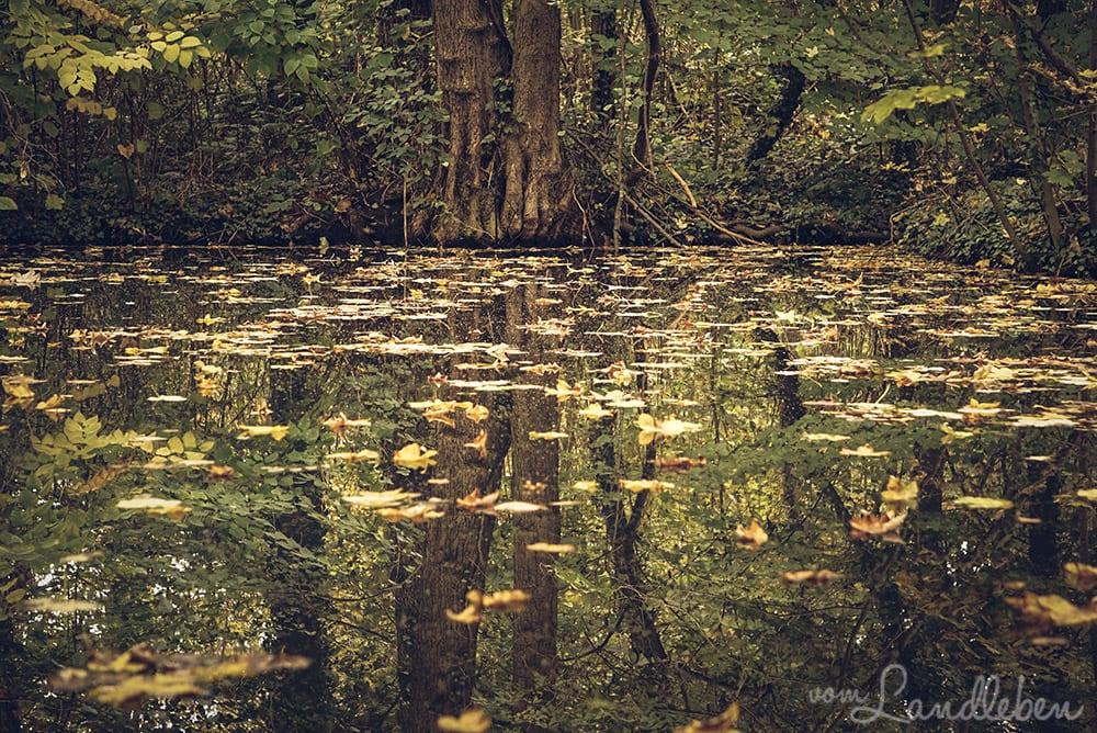 #fotoprojekt17 – Herbstwald